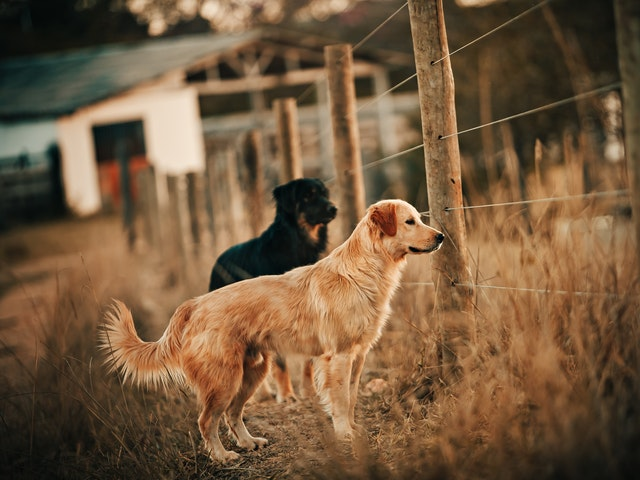 Are Dog Fences Really Effective?